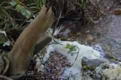 sfeerfoto-water-Big-game-ebro-uitzicht-meerval-7