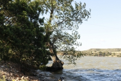 sfeerfoto-water-boom-waterkant-Big-game-ebro-uitzicht-meerval-7