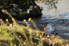 sfeerfoto-water-boom-waterkant-Big-game-ebro-uitzicht-meerval-8